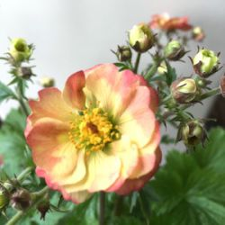 Geum 'Censation™ Lipstick'