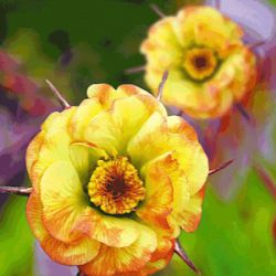 Geum 'Cocktail™ Tequila Sunrise' ®