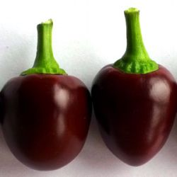 Capsicum annuum 'Cherry Chocolate'