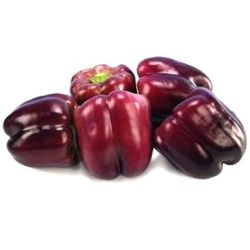 Capsicum annuum 'Purple Star F1'